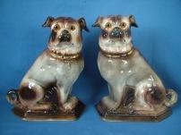 Staffordshire Pugs